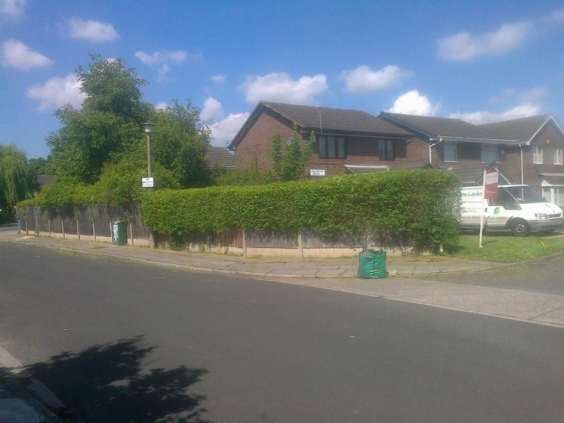 hedge trim (2)
