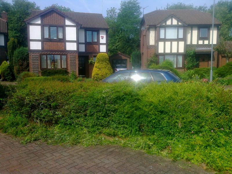 hedge a